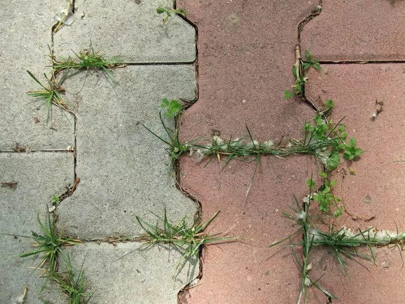 трава между тротуарной плиткой